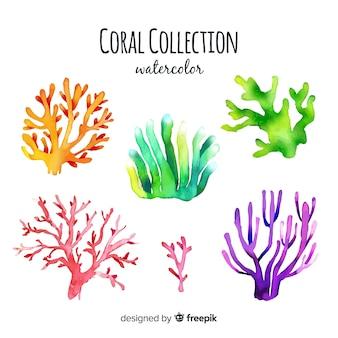 Коллекция акварелей кораллов