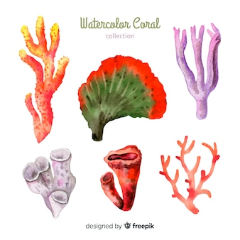 手描きのカラフルなサンゴコレクション
