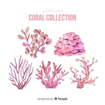 Нарисованная рукой красочная коллекция кораллов