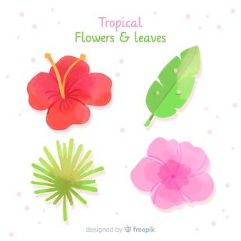 熱帯の葉と花のコレクション