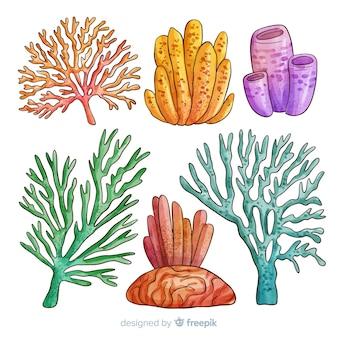 Коллекция кораллов