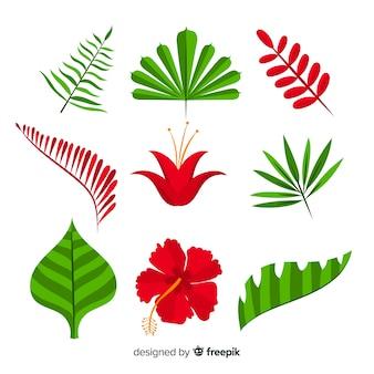 熱帯の花と葉