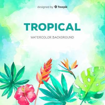 水彩の熱帯植物と鳥の背景