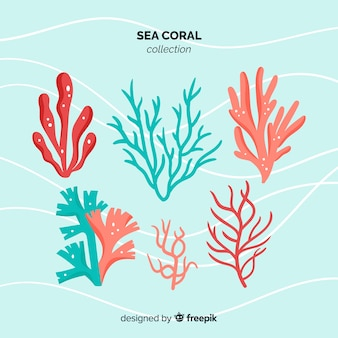 Плоская коллекция кораллов