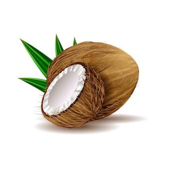Реалистичная кокосовая иллюстрация