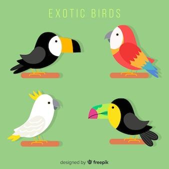 Плоская мультяшная коллекция экзотических птиц
