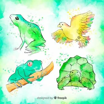 Коллекция тропических животных в акварельном стиле