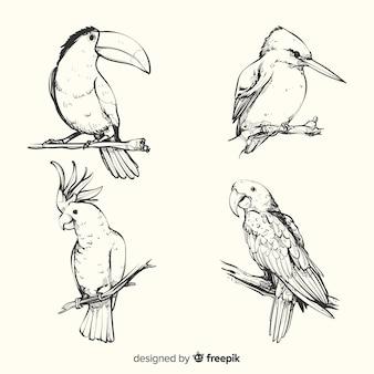 手描きのエキゾチックな鳥のコレクション