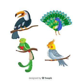 平らなエキゾチックな鳥のコレクション