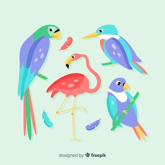 平らなエキゾチックな鳥のパック