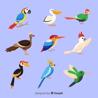 Стая плоских экзотических птиц