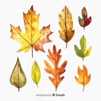 秋の紅葉水彩風のセット
