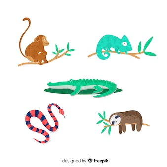 熱帯動物のセット:サル、カメレオン、ワニ、ワニ、ヘビ、ナマケモノ。フラットスタイルデザイン