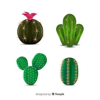 Четыре реалистичных кактуса иллюстрированы, изолированные