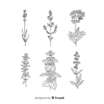 現実的な手描きの花と葉のコレクション