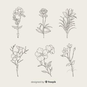 現実的な手描きの植物の花セット
