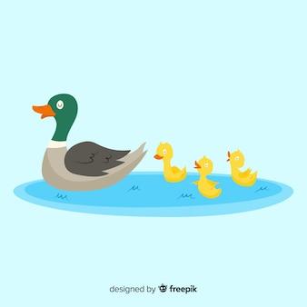 水たまりに平らな母鴨