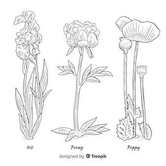 さまざまな植物タイプの野生の花