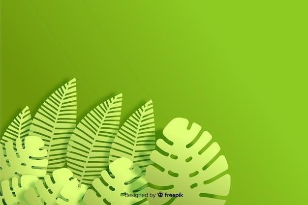モノクロ背景モンステラ植物
