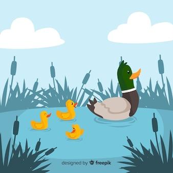 平らな母鴨と池のアヒル