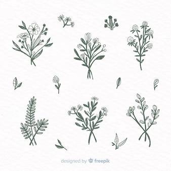 Набор рисованной растительных орнаментов
