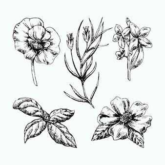Реалистичные рисованной травы и дикие цветы