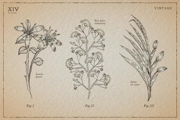 植物性ハーブとビンテージスタイルの野生の花