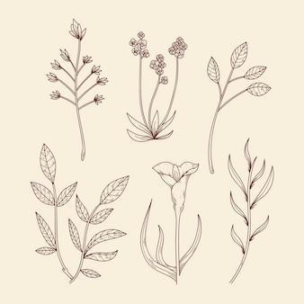 Ботанические травы и полевые цветы в винтажном стиле