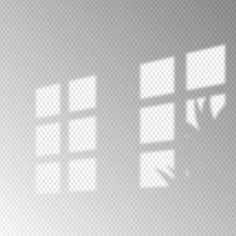 透明なミニマリストシャドウオーバーレイ効果と植物