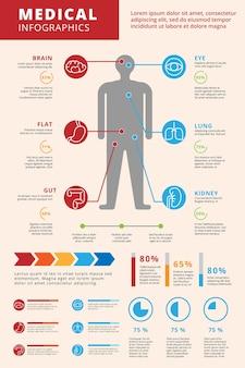 Анатомия медицинская инфографика человеческого тела