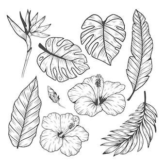 Коллекция тропических листьев и цветов