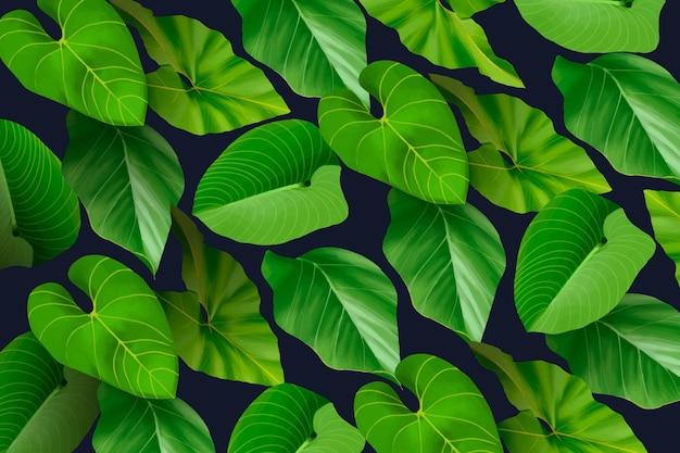 Тропические листья обои для увеличения