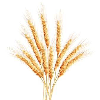 Колосья пшеницы с пространством для текста.