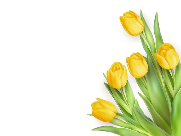 黄色のチューリップの花と春の自然な背景。