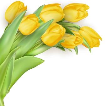 白い背景の上のチューリップの母の日の花束。