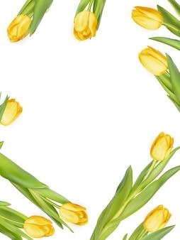 白地に黄色の新鮮なチューリップ。