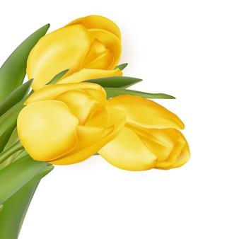 黄色の花は白い背景で隔離されました。