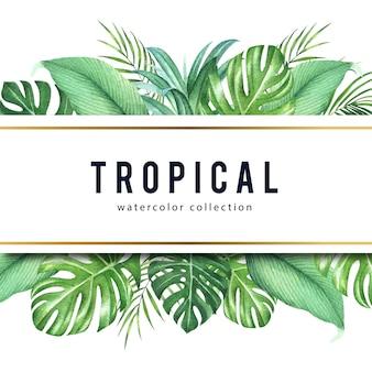 Тропический дизайн рамы с монстера листья и пальмы, векторные иллюстрации.