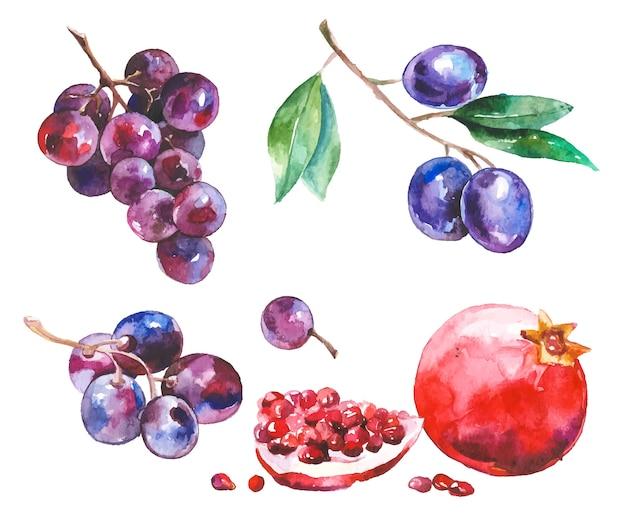 水彩、果物、白、