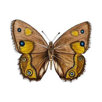 分離された茶色の蝶