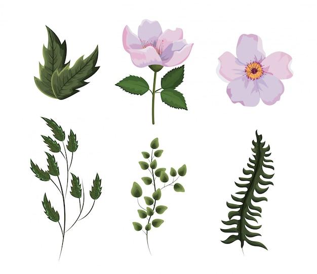 花の植物の枝の葉を設定します