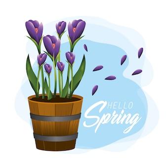 エキゾチックな花と春の植木鉢の中の葉