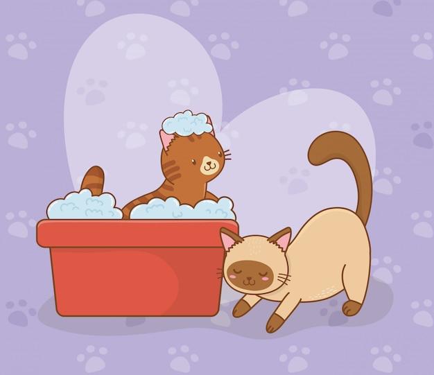 Симпатичные маленькие кошки талисманы персонажей