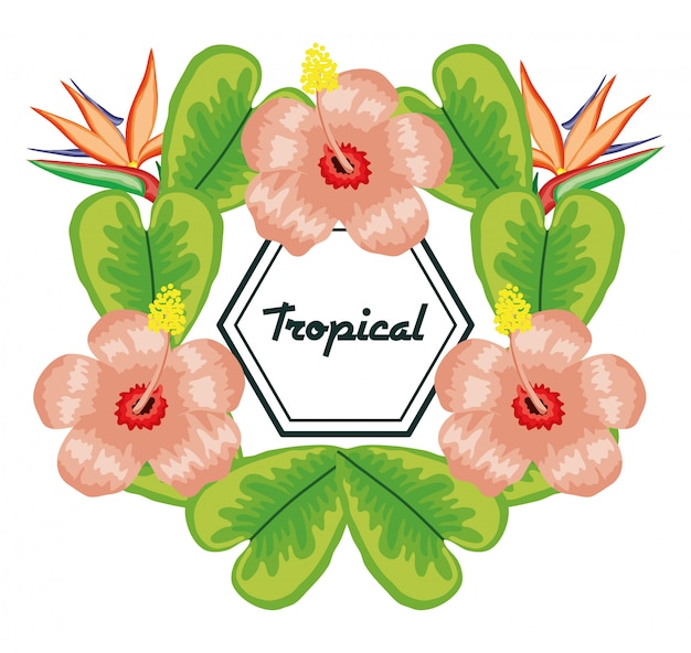 熱帯の花と葉の幾何学的なフレーム