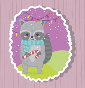 Милый енот с конфетой с рождеством