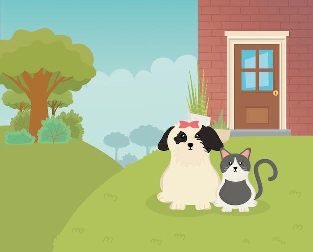 ペットケアの外の家に座っている犬と猫