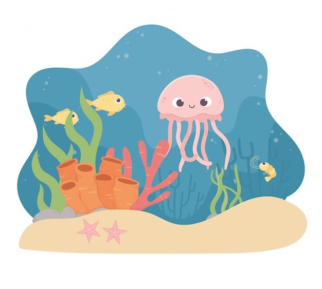 Медузы, рыбы, морские звезды, креветки, жизнь, коралловый риф под морем.