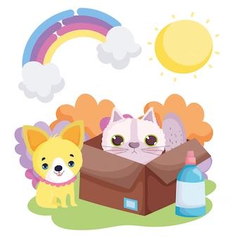 Собака и кошка в коробке природа пейзаж домашние животные