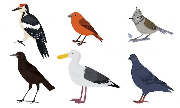 さまざまな種類の都市鳥ベクトルイラスト