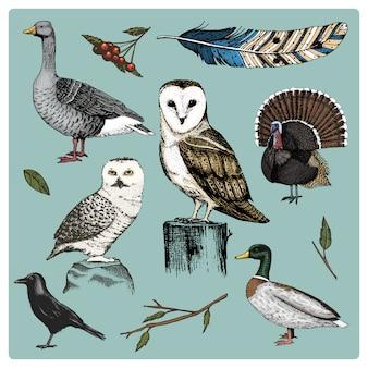手描きのリアルな鳥、スケッチグラフィックスタイル、国内のセット。七面鳥とアヒル。ガチョウとカラス。鳩とスズメ。カラスと羽。タイプミスアルバ、白いフクロウ、納屋、長い耳。